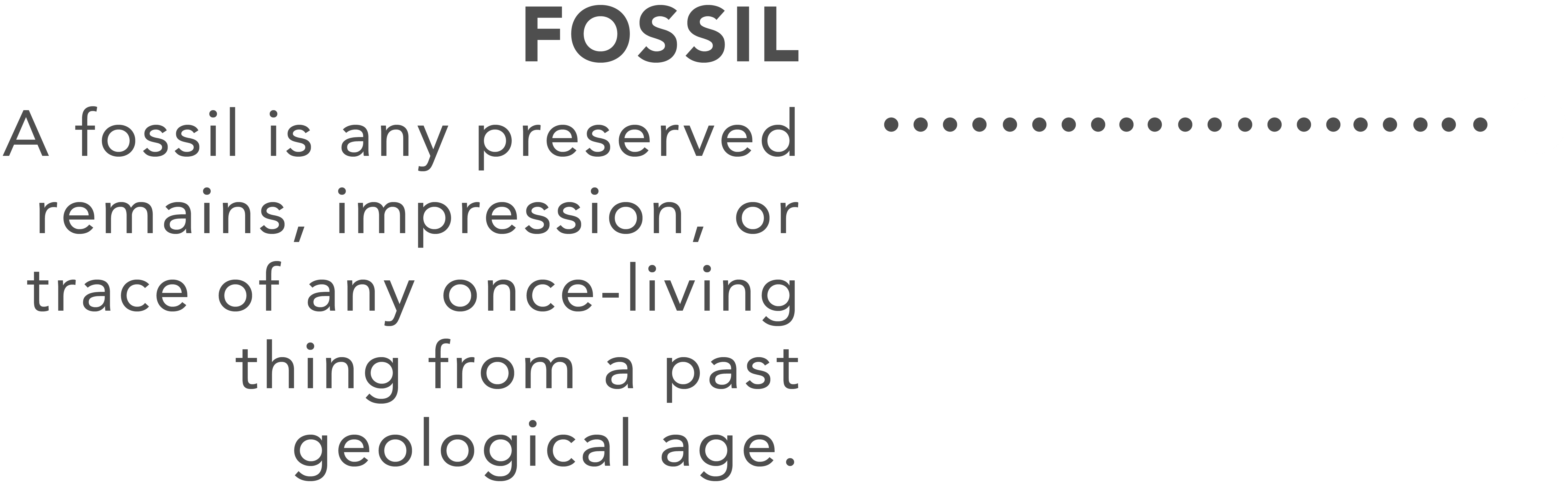 Fossil - Assemblr | Augmented Reality Platform for Everyone - Assemblr is an ecosystem that empowers you to create, share, and discover augmented reality experiences. We make AR easy to use & access, anytime & anywhere.