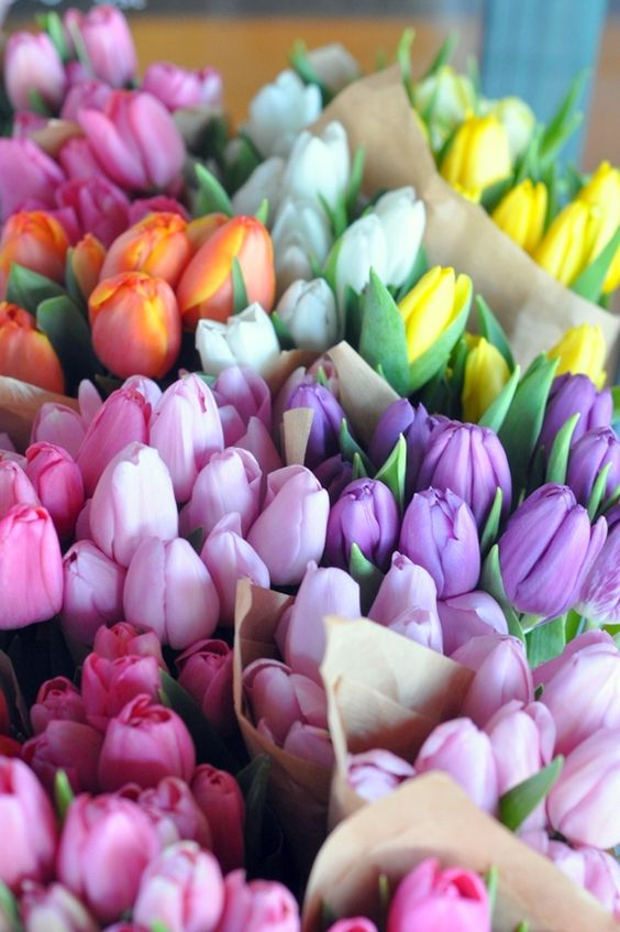 tulips, spring flowers