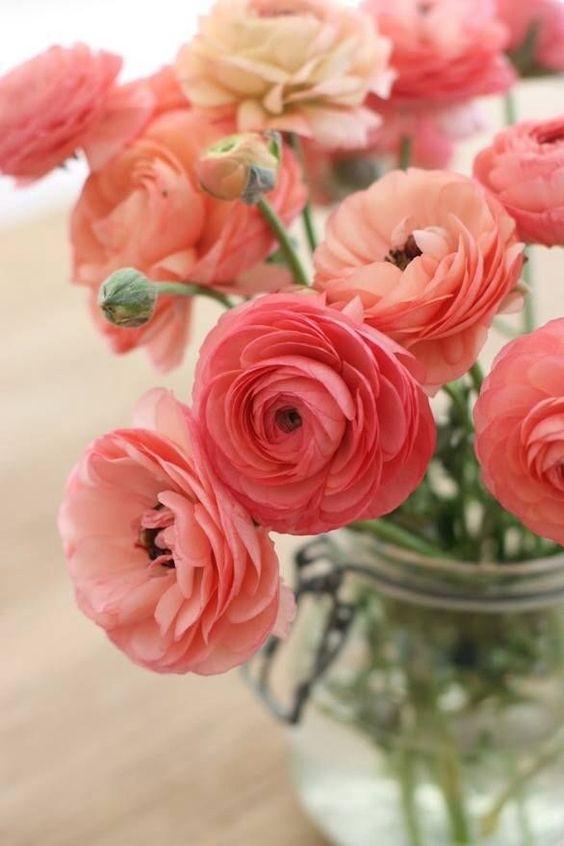 ranaculus, spring flowers