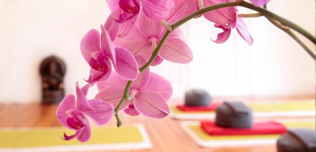 CCA Yoga Nidra: Teacher Training