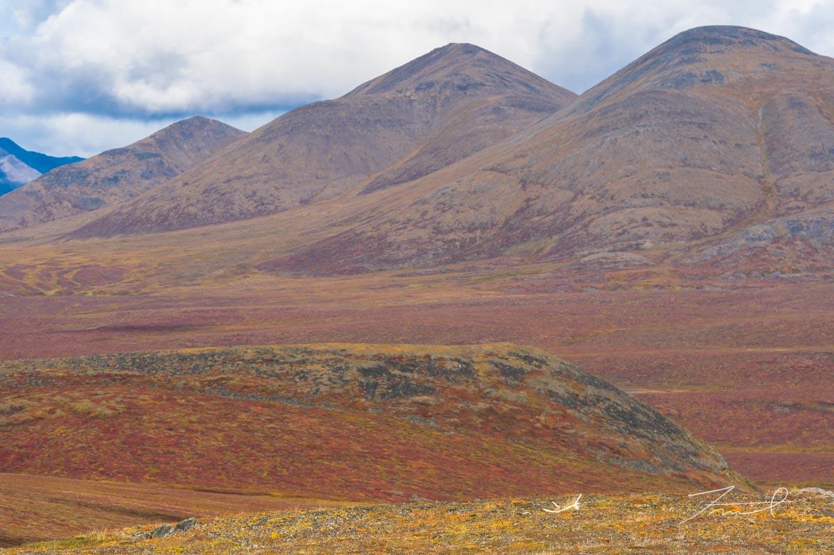 古いカリブーの角が残された丘と、赤と黄色の紅葉が覆う北極の山脈