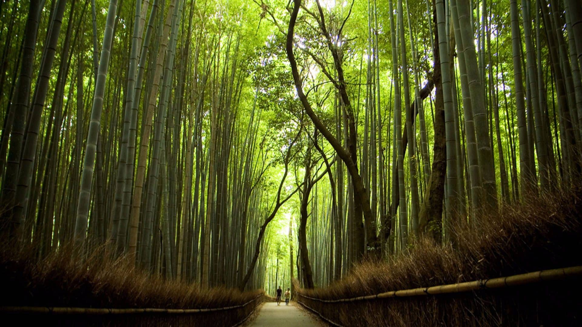 Viaggio di nozze Agosto Giappone Bamboo forest