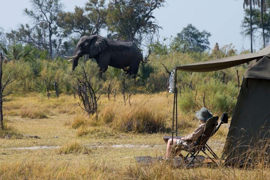 viaggio di nozze in africa safari di lusso in Botswana