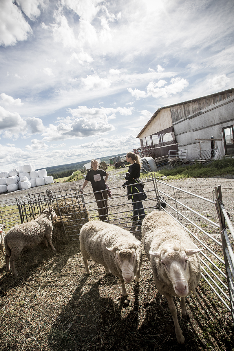 Two women stand in the forecourt of a farm with farm buildings in the background. They are standing in front of a feeding lot, where some sheep are enclosed and are happily eating hay