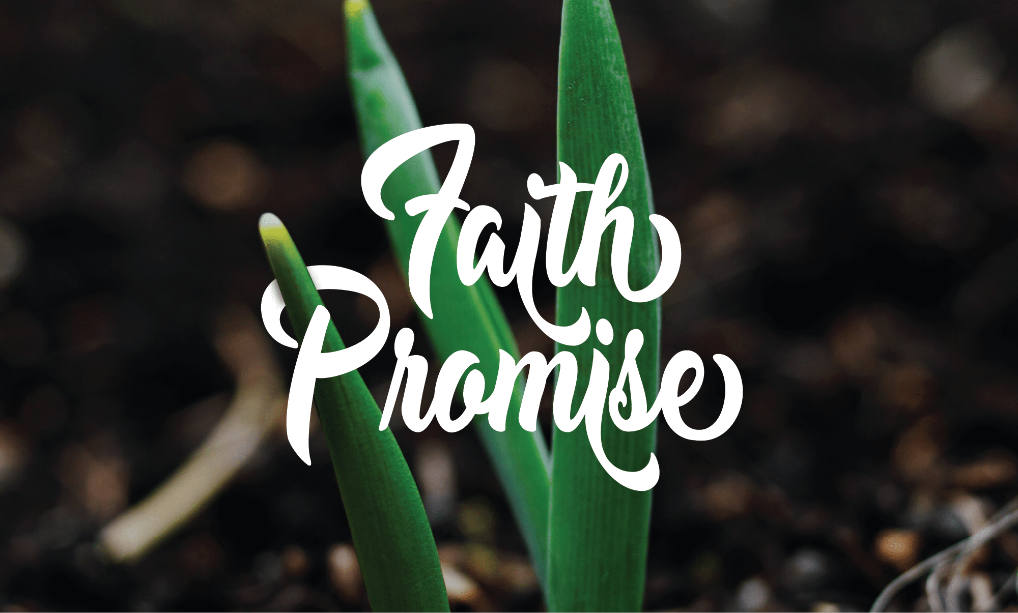 "A graphic that says ""Faith Promise"" in a decorative font agains a photo of a plant"