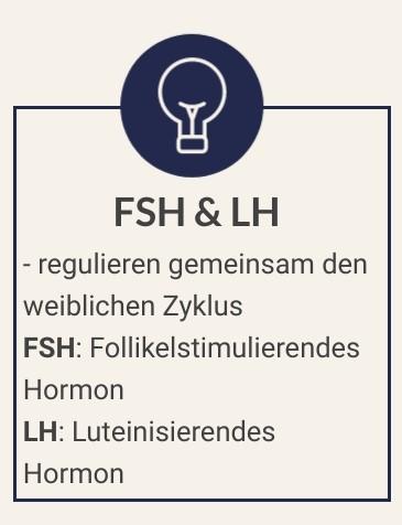 Dein Kinderwunsch FSH LH kurz erklärt
