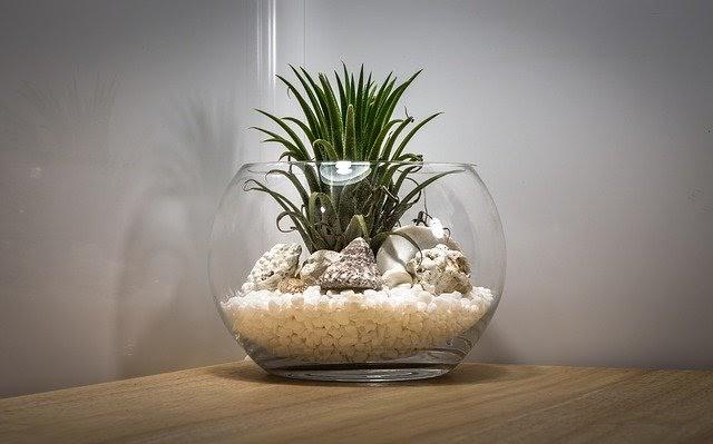 Terrarium with plants inside
