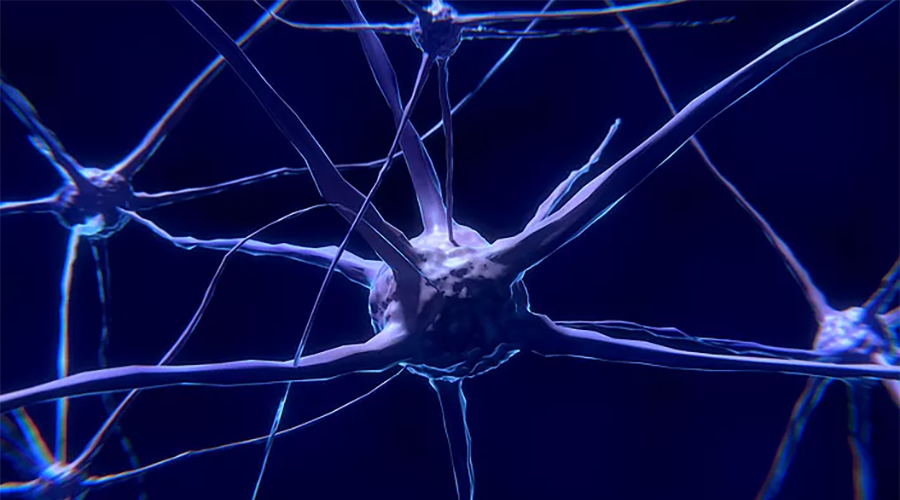 What's the Difference between Dementia and Alzheimer's?