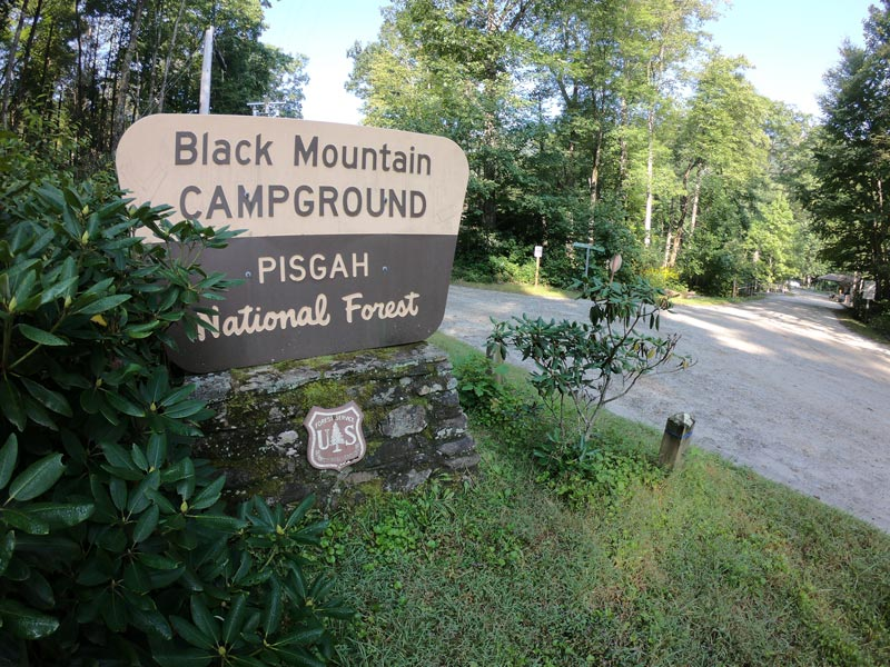Camping at Black Mountain Campground, Pisgah National Forest entrance signage next to rhododendron bush in North Carolina