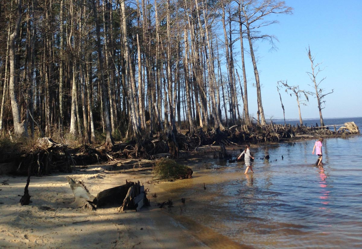 Two girls wading near cypress trees in Croatan National Forest