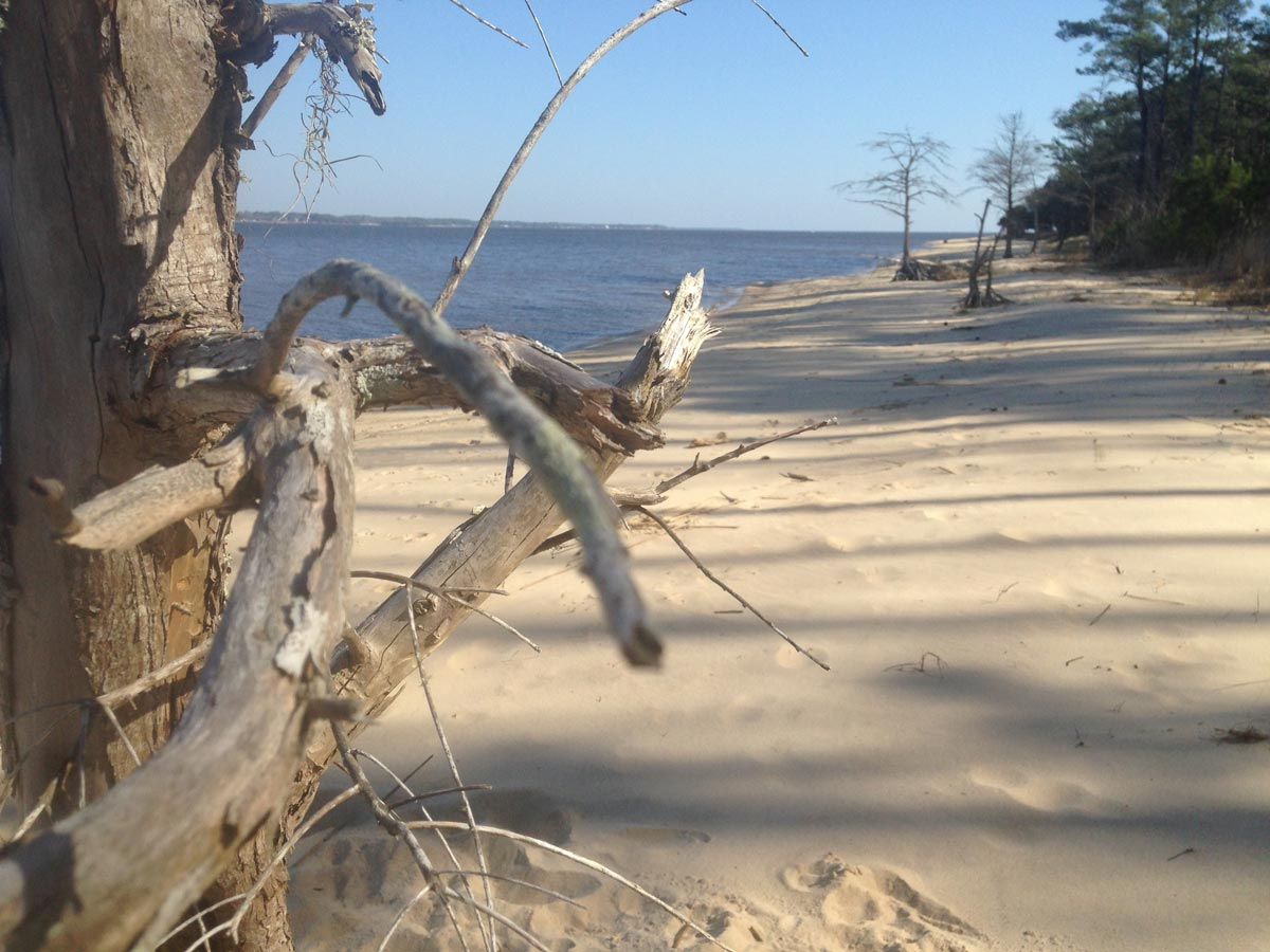 Sandy beach at Croatan National Forest