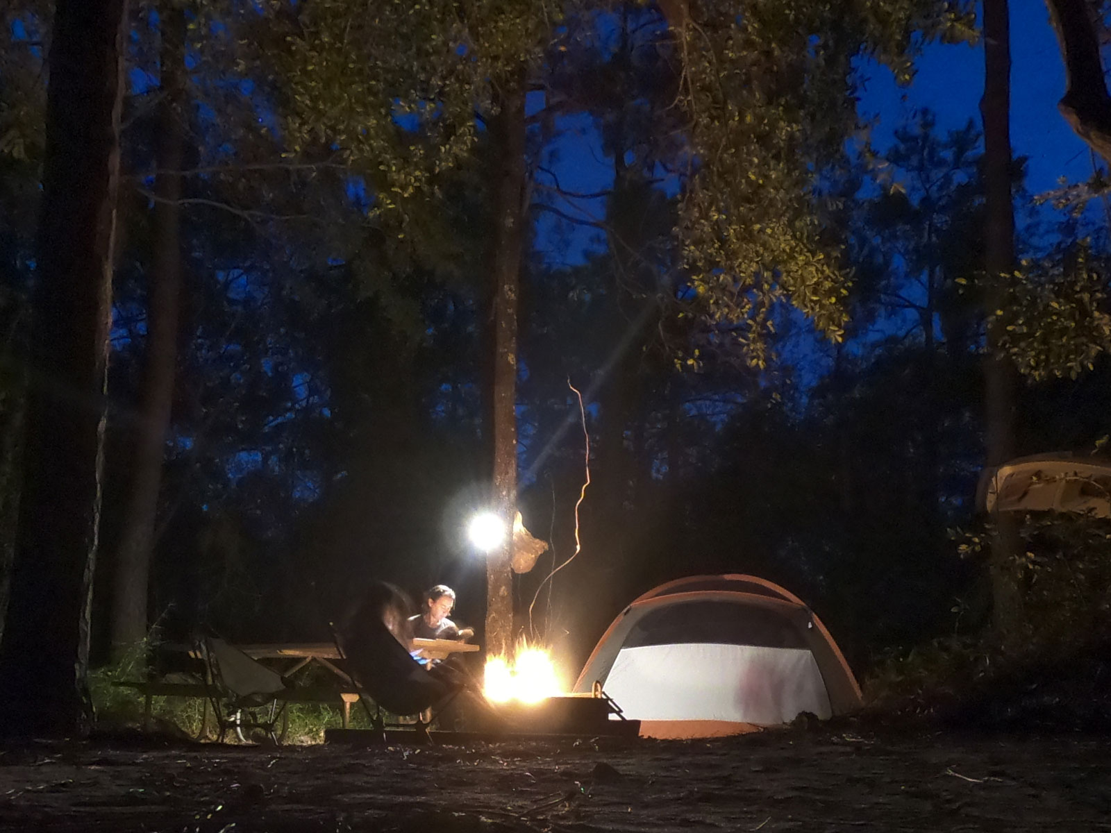 Night camping under the stars at Carolina Beach State Park Campground, North Carolina