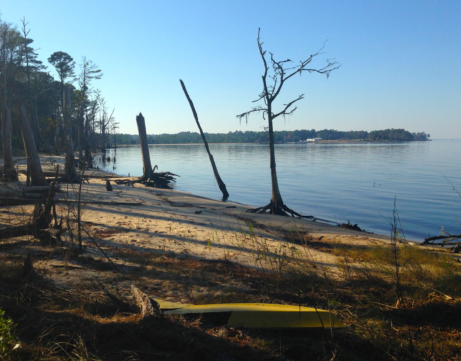 Neuse River from Croatan National Forest