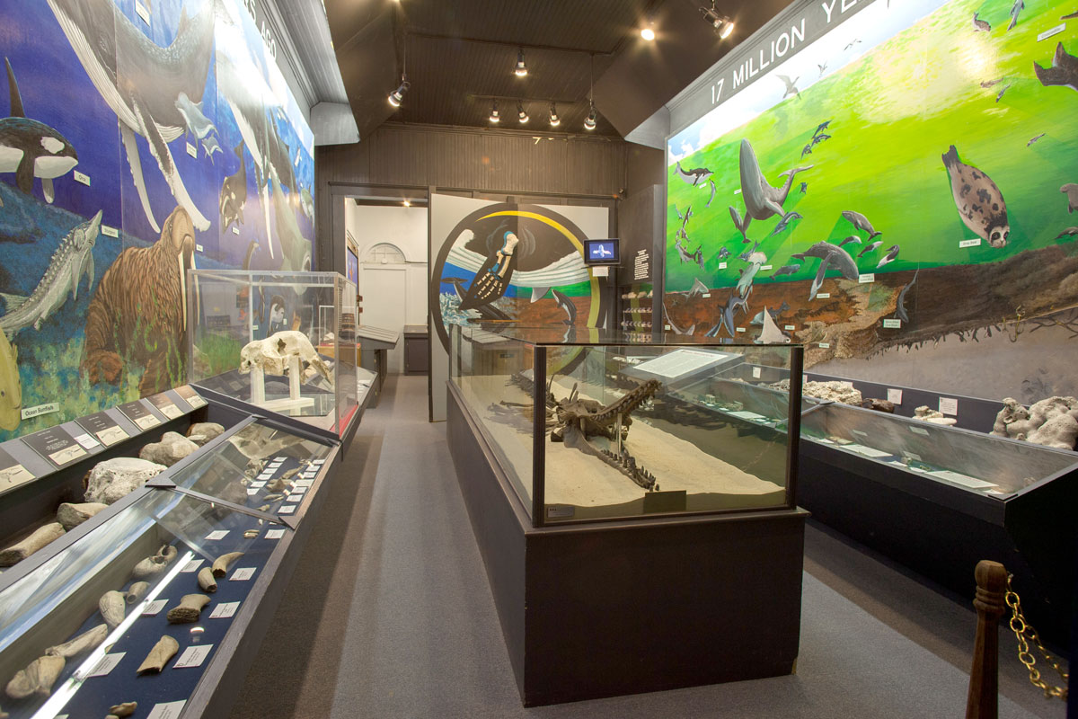 Interior exhibits of Aurora Fossil Museum