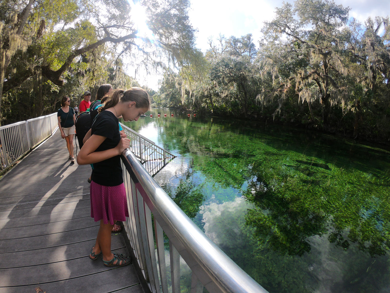 Young girl and others at observation deck looking for manatees in the green waters at Blue Spring State Park, Florida