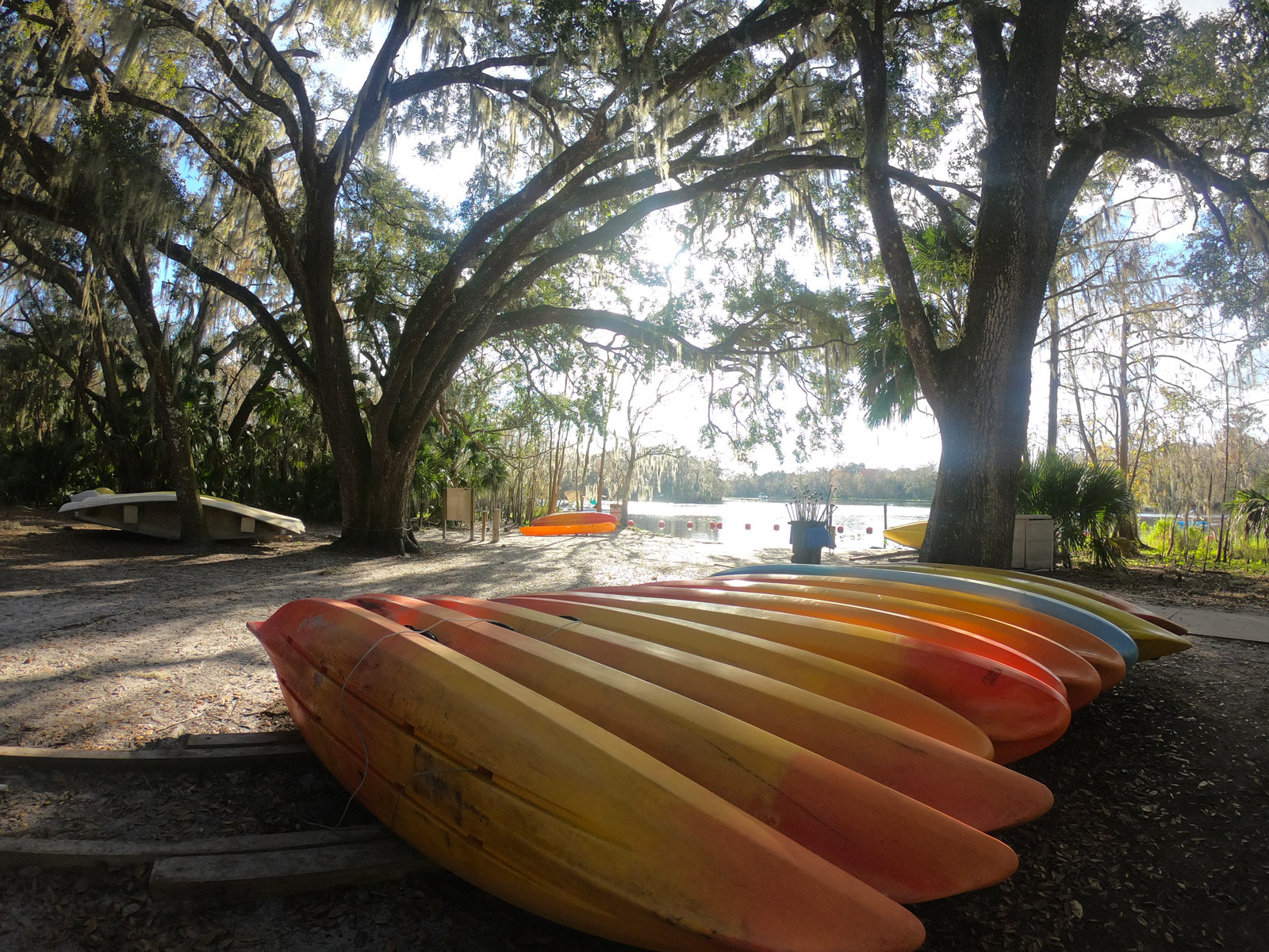 A row of yellow canoes under live oaks draped in Spanish moss on St Johns River at Blue Spring State Park, Florida