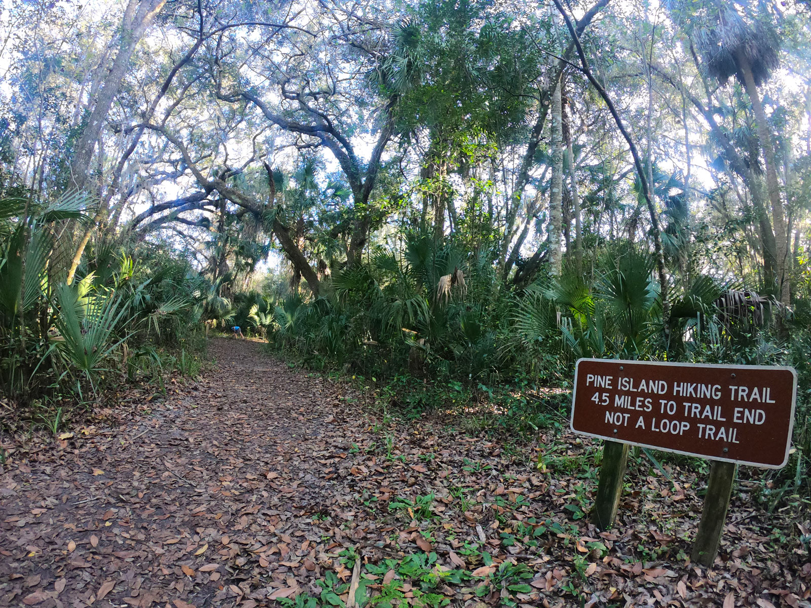 Pine Island Trail brown signage at trailhead with palm trees at Blue Spring State Park, Florida