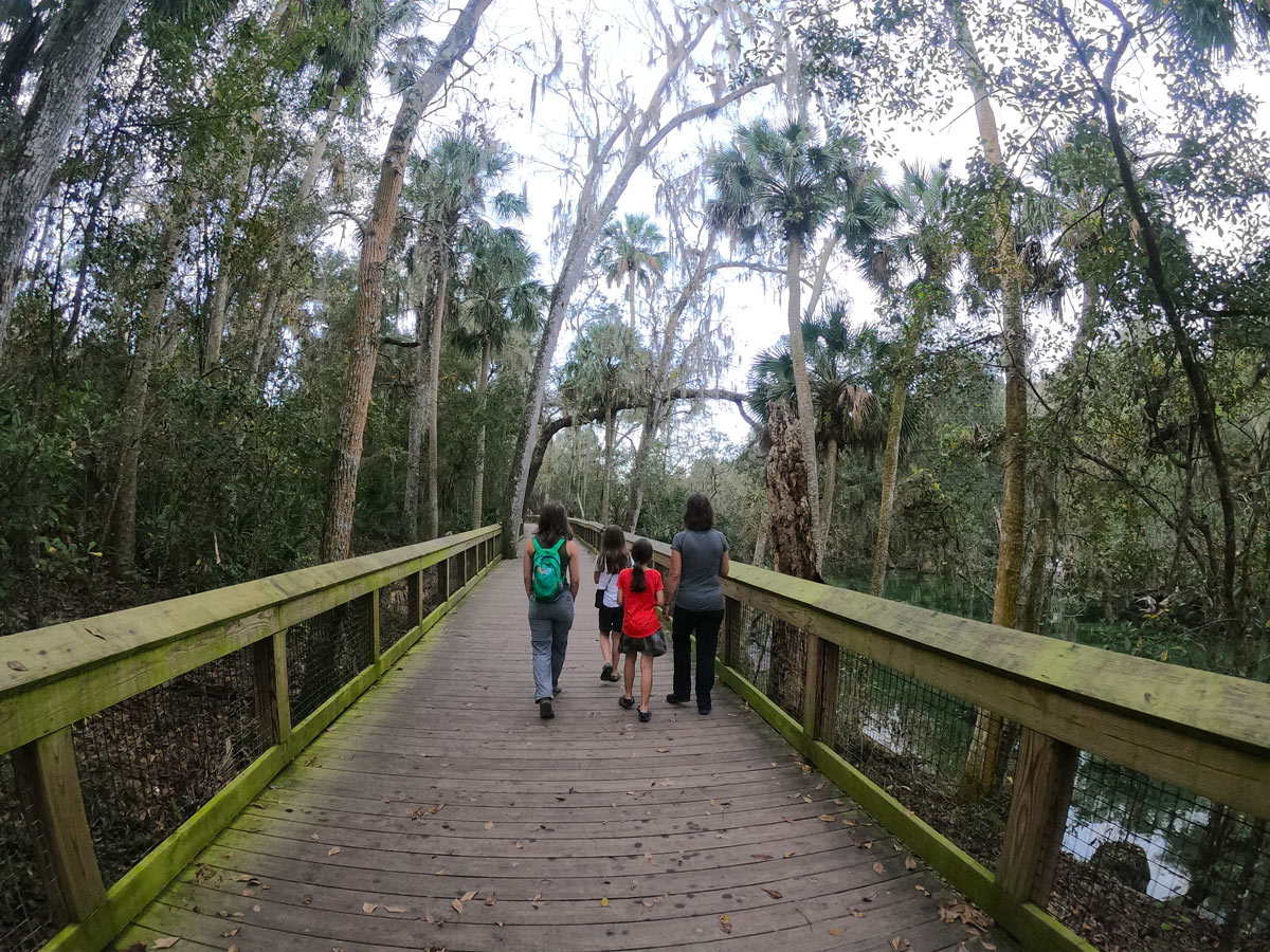 Four people walking the boardwalk under a canopy of live oaks with Spanish moss at Blue Spring State Park, Florida