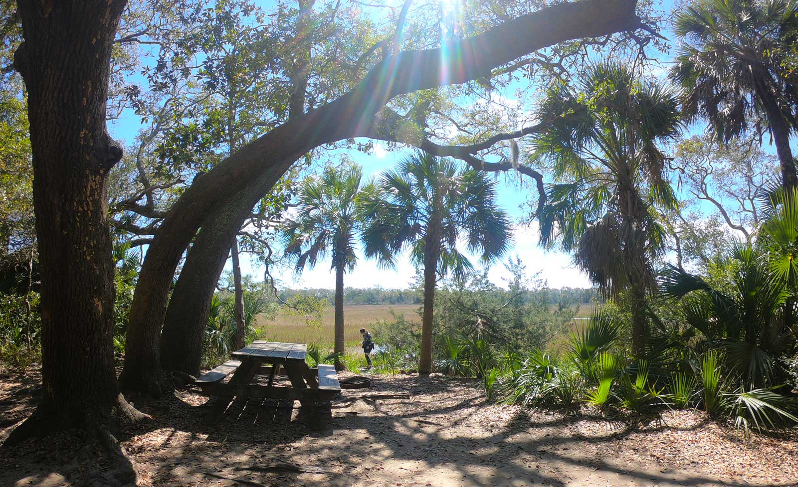 Live Oak Campground walk-in campsite with picnic table and kids playing in nearby salt marsh  while camping at Edisto Beach State Park, SC