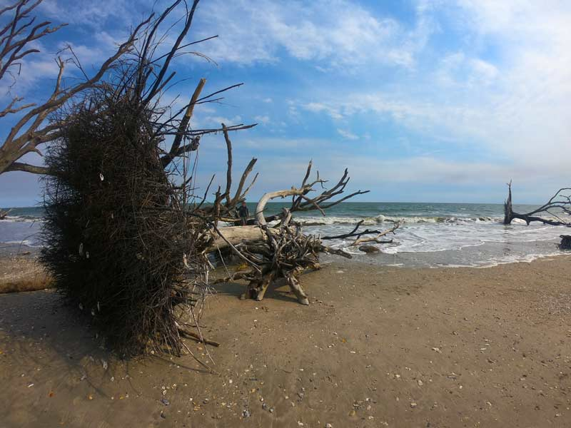 Boneyard Beach at Botany Bay while camping at Edisto Beach State Park, South Carolina