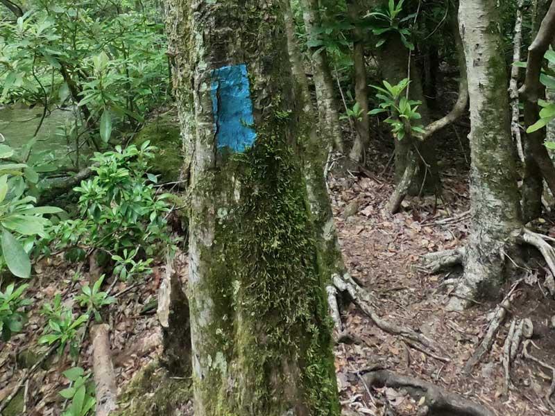 Blue blaze marking Kimsey Creek Trail