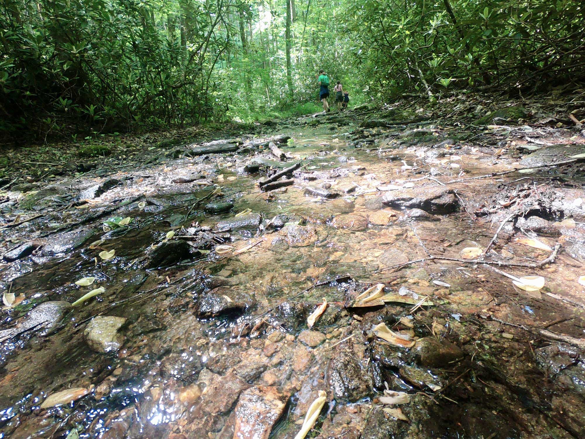 Kids hiking on the wet trail of the Kimsey Creek Trail at Standing Indian Campground, North Carolina