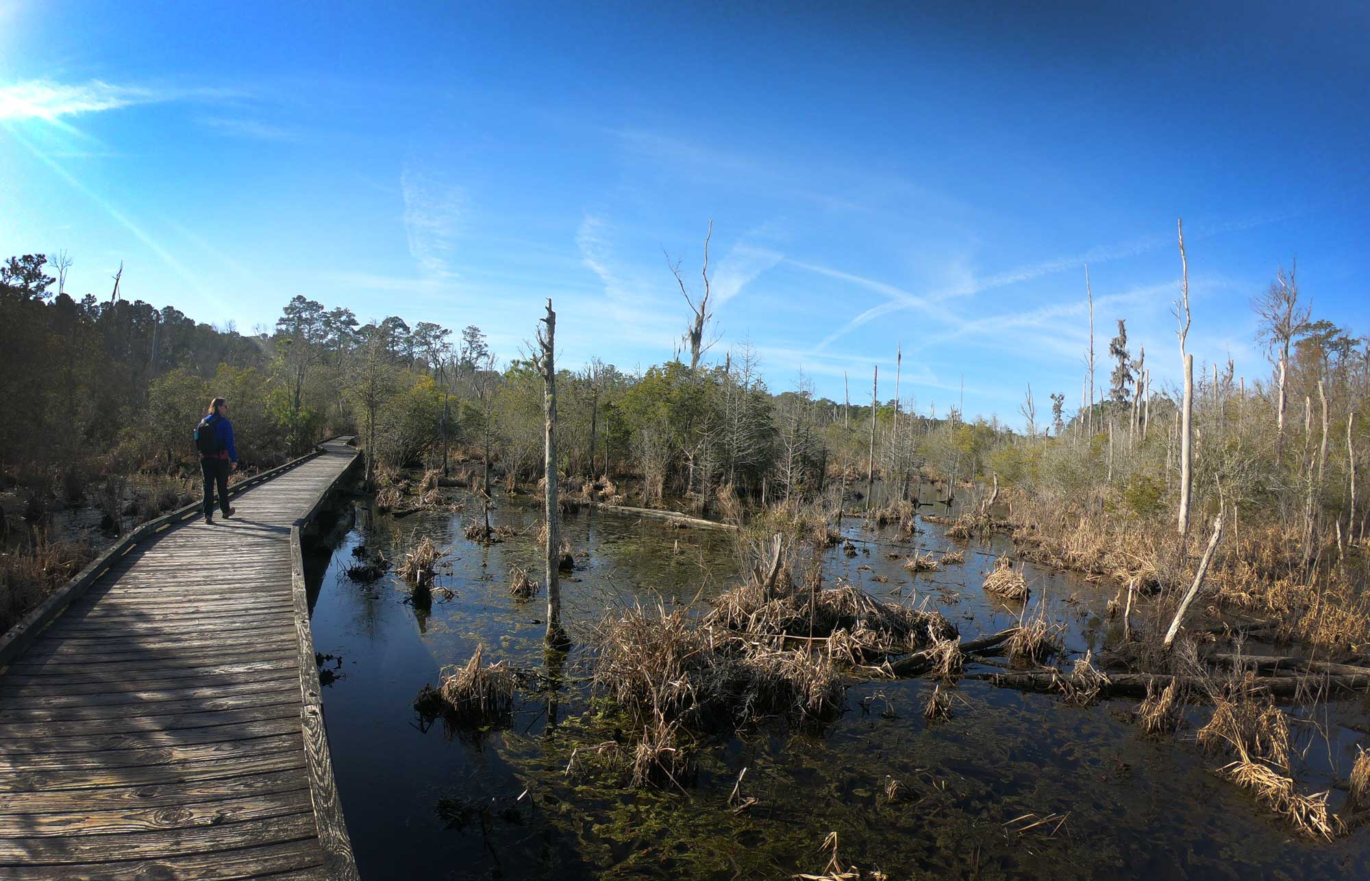 Hiker on Goose Creek State Park Palmetto Boardwalk walking through marsh