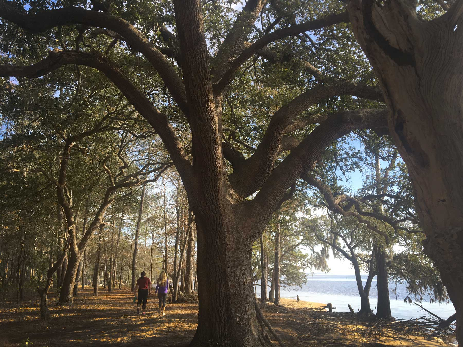 Two people walking under live oaks on the Live Oak Trail in Goose Creek State Park, North Carolina
