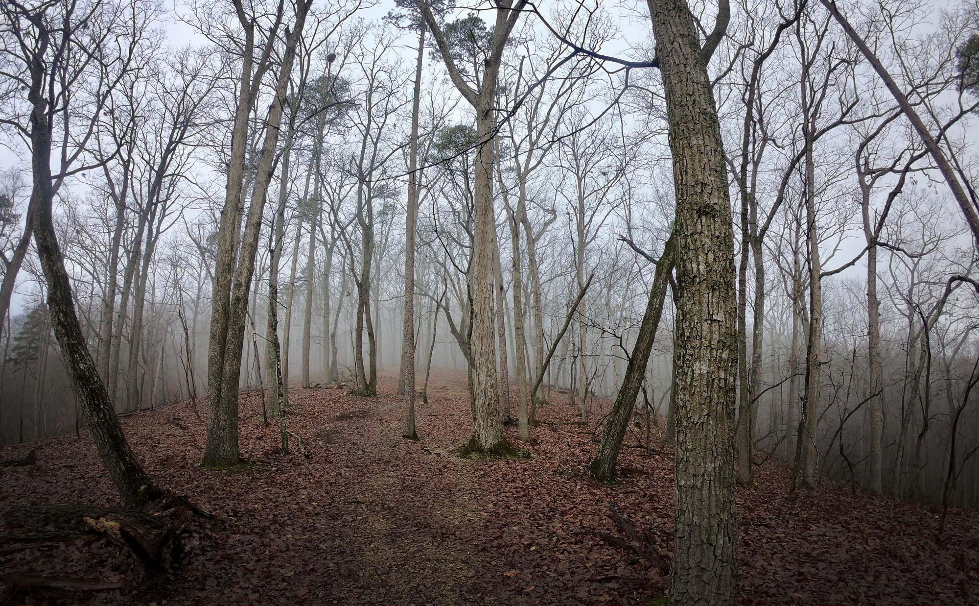 Misty fog on the Morrow Mountain Trail  in Morrow Mountain State Park, North Carolina