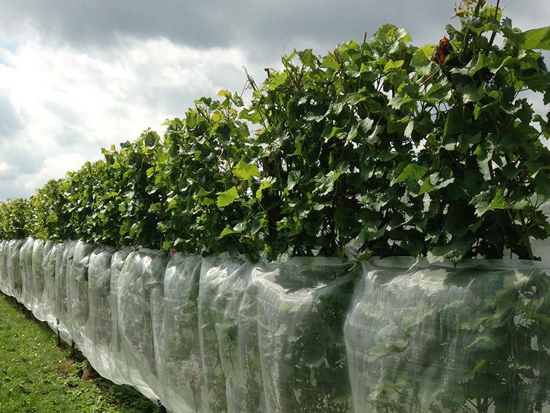 Suzuki fruitvlieg net