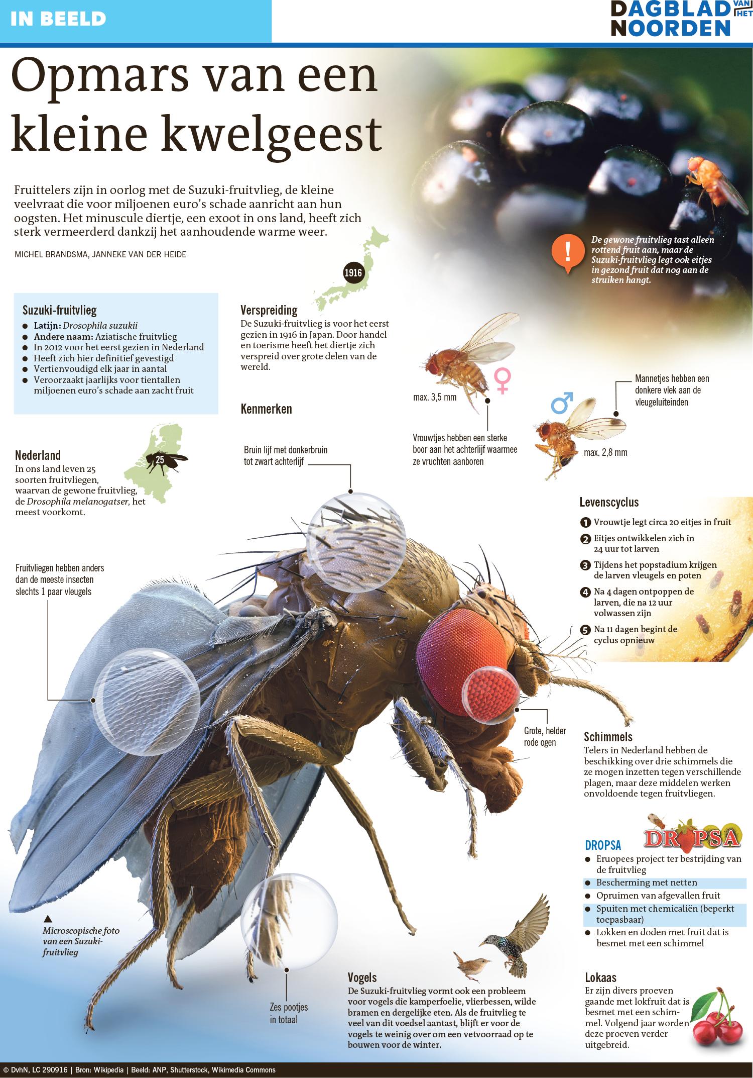 De Suzuki fruitvlieg in een vogelvlucht