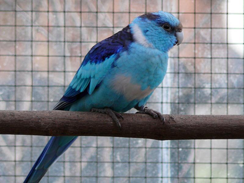 Aviaria Vogelnet
