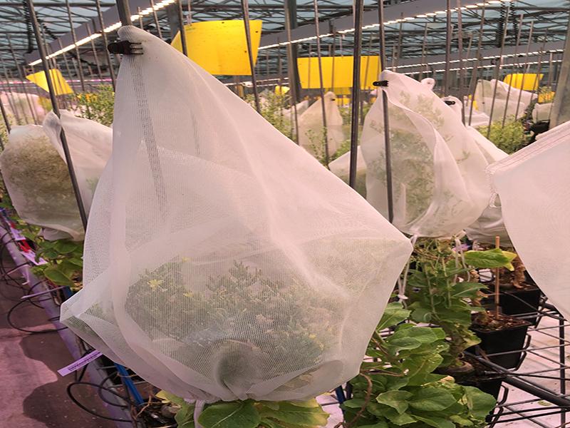 Botra Seedbag Polyester