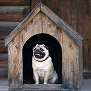 Pug sitting in a wooden dog house
