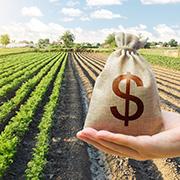 harvesting capital gains - money bag by a soy bean fielde