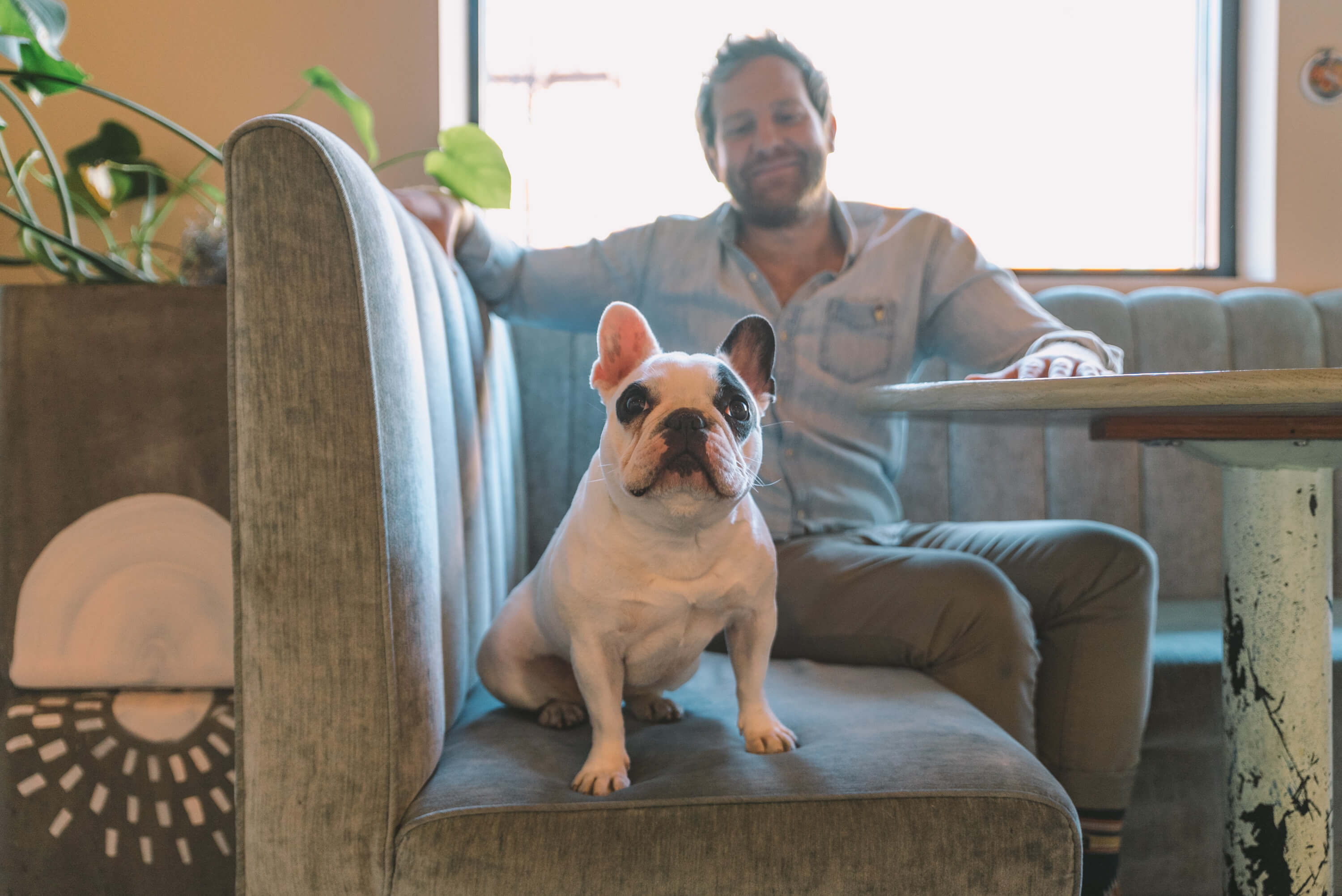 Ozzie, Rebecca and Rowen's french bulldog for Wellfed Creative Podcast
