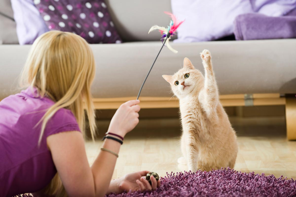 Eine aktive Katze bleibt gesund