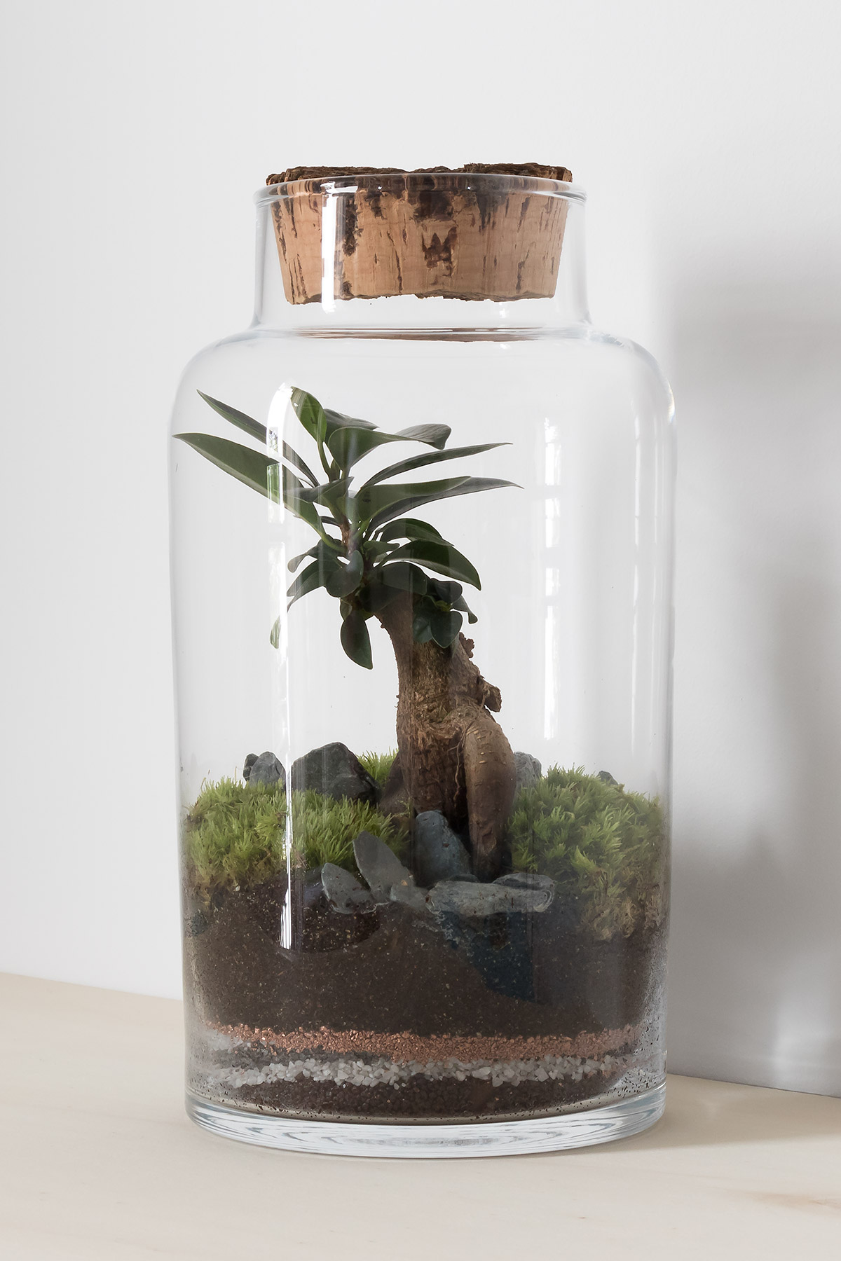 Cylindrical glass terrarium with bonsai ficus tree, gravel and moss garden with cork stopper