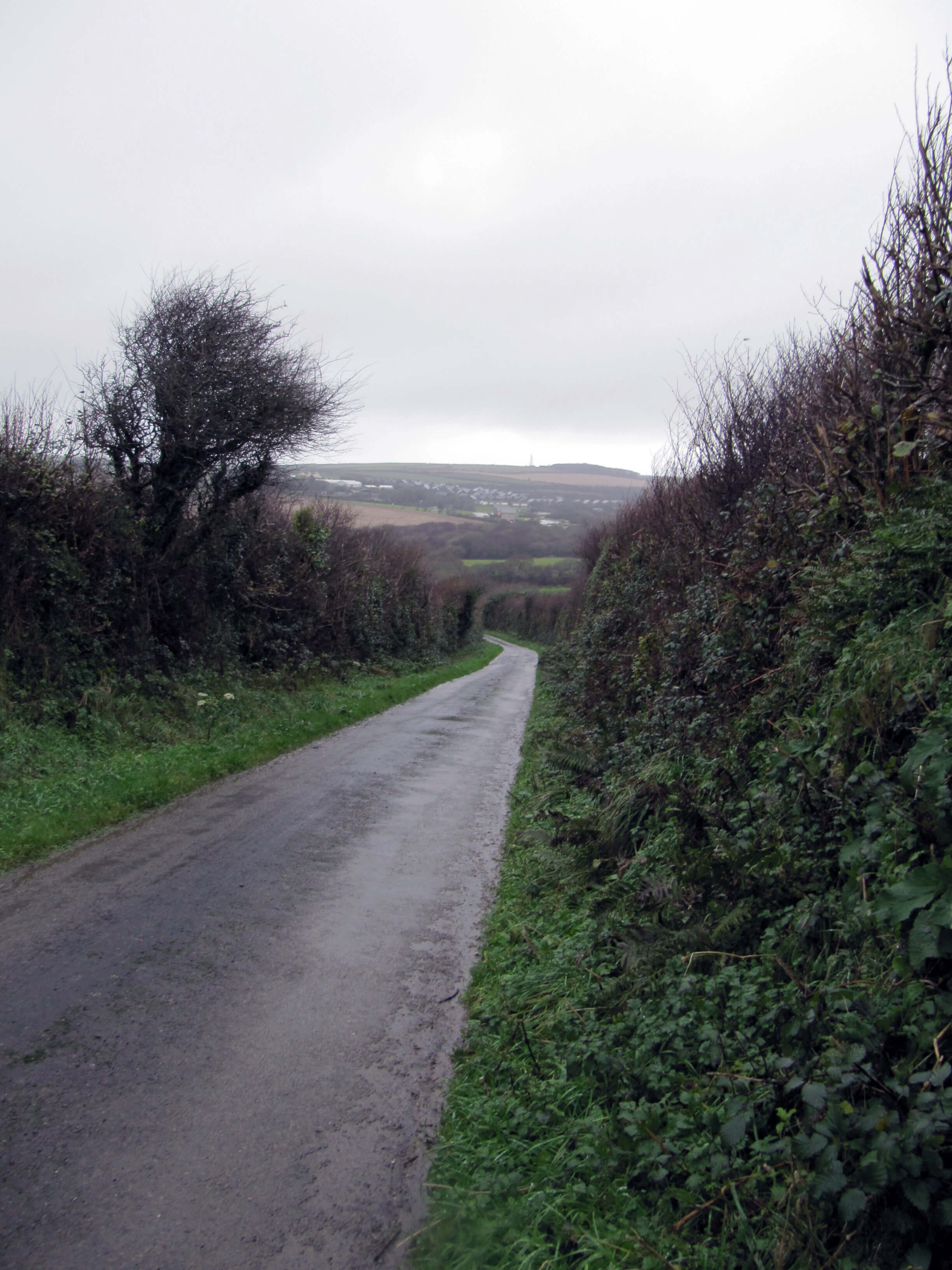 a rural road flanked by natural hedging on a foggy day