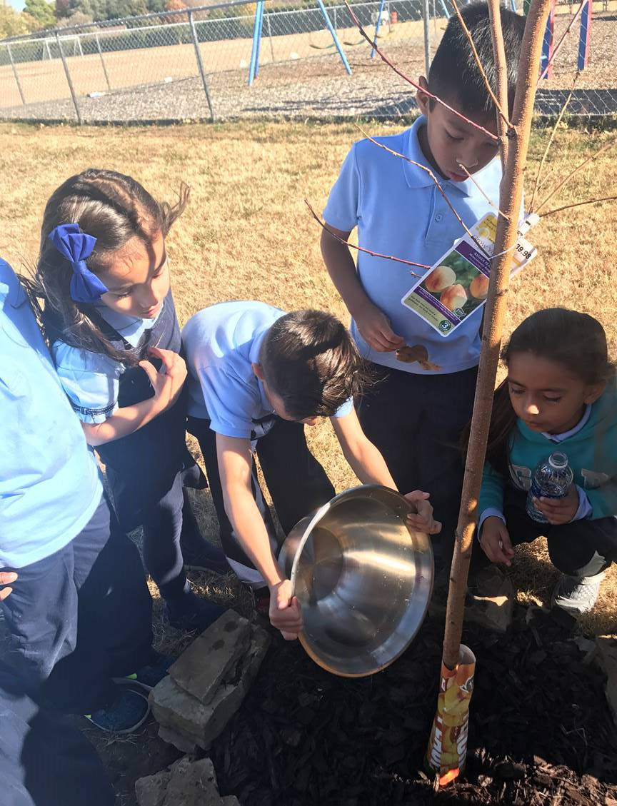 Students Plant a Tree Knowledge Seekers Christian School