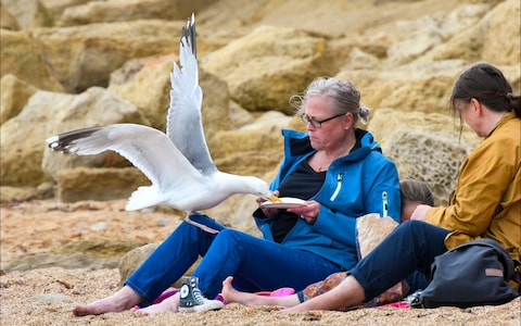 Tourism chiefs fear over aggressive seagulls are scaring away visitors