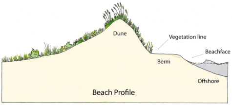 A beach profile consists of a sand dune, vegetation line, berm, sloped beach face, and the underwater offshore. (Port City Daily photo/Courtesy N.C. Sea Grant)