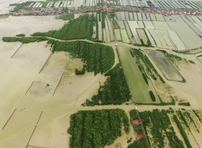 In Java's Demak district, 7 square miles of land has been permanently inundated due to the loss of mangrove forests.
