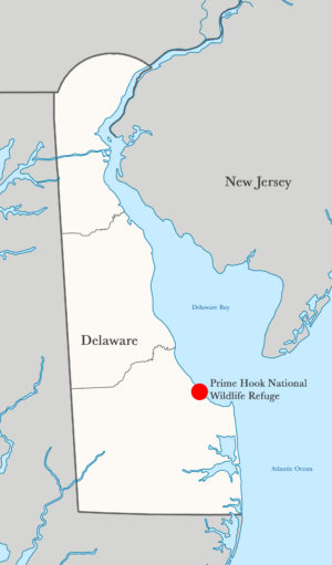 Prime Hook National Wildlife Refuge is located near the mouth of Delaware Bay.