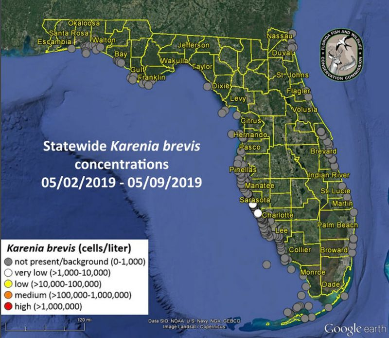 Coastal News Today | First signs of algae that cause red tide found