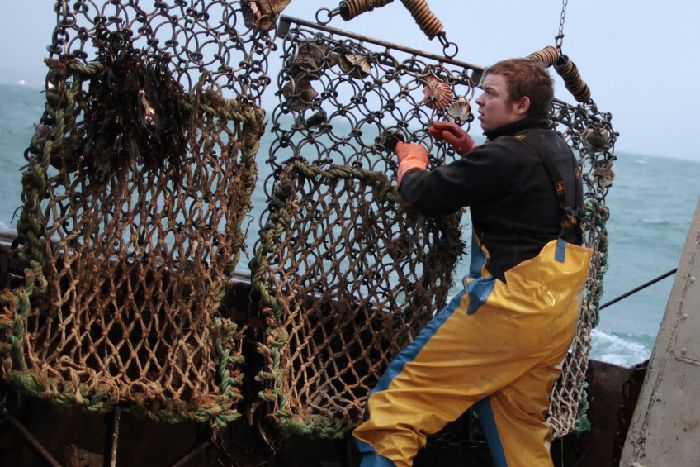 Clearing the nets aboard a scallop dredger. Picture: Getty