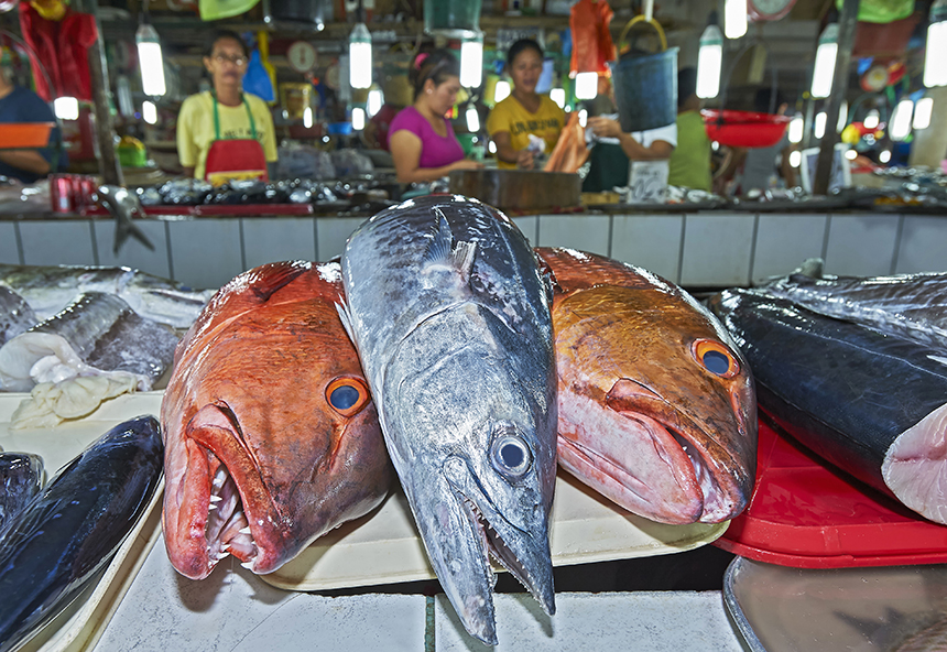 Top ocean predators are fished more quickly than they are able to reproduce. (istock)