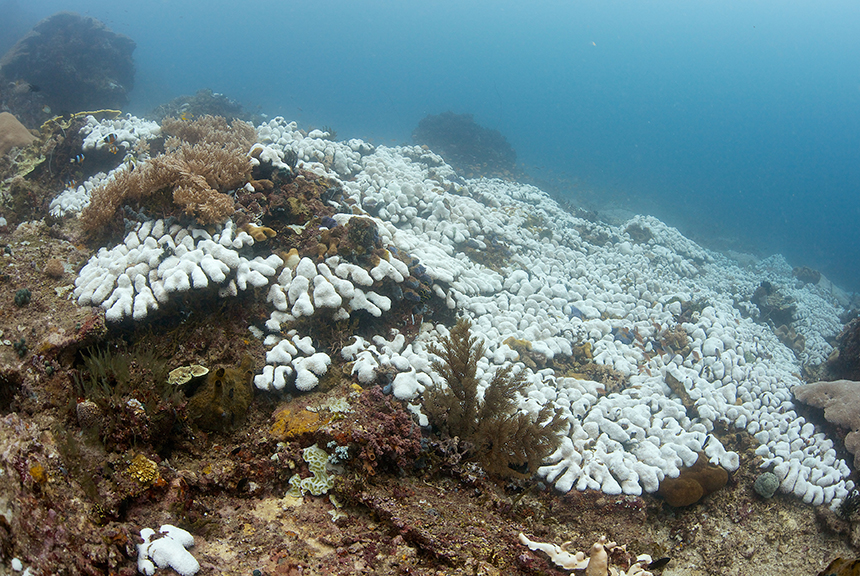 Acidifying waters brought on by manmade climate change are bleaching corals and killing the most biodiverse habitats in the ocean. (istock)