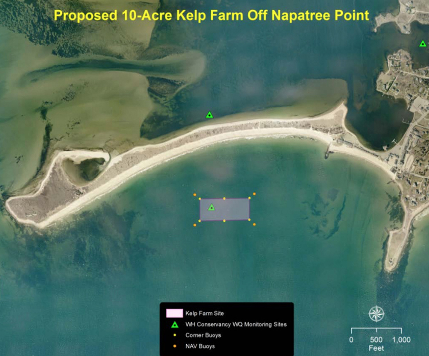 The proposed site of a kelp farm in Westerly, R.I., would be less than 1,000 feet from the shores of Napatree Point, a protected conservation area. (The Watch Hill Conservancy)