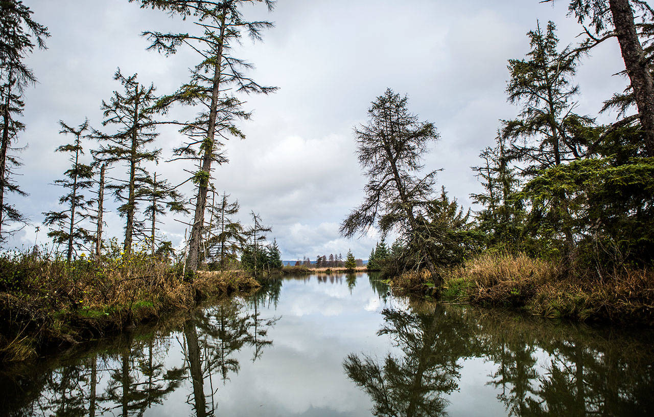 A waterway leading into Otter Island off Steamboat Slough on April 11 in Everett. (Olivia Vanni / The Herald)